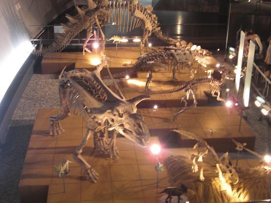 100729-30・福井勝山恐竜旅行 022