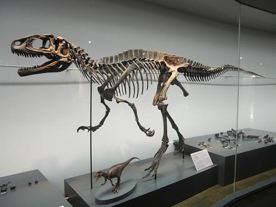 100729-30・福井勝山恐竜旅行 026