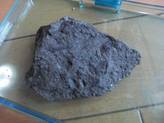 100731・ユウシン発掘化石 001