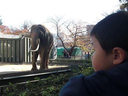 101127・王子動物園と沖縄屋 012