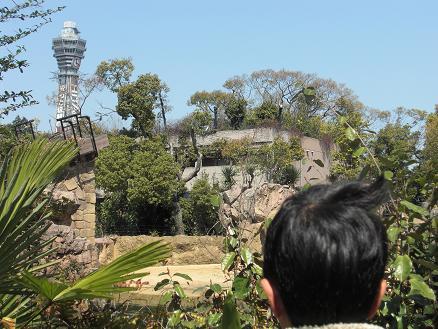 110328・天王寺動物園 001