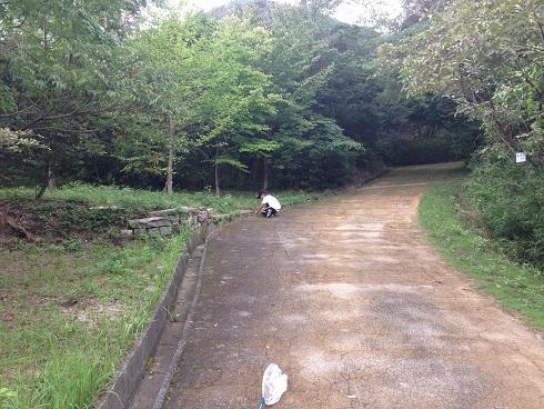 140827 甲山昆虫採集 (18)