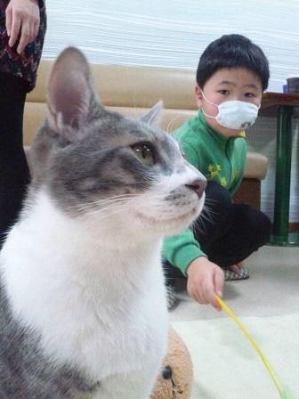 150208 ユウシンと猫