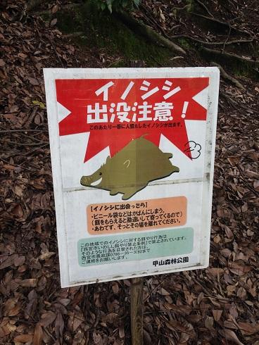 140827 甲山昆虫採集 (4)