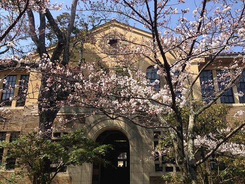 150330 大学の桜 (6)
