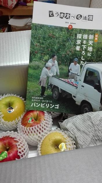 161028 相馬のリンゴ (1)