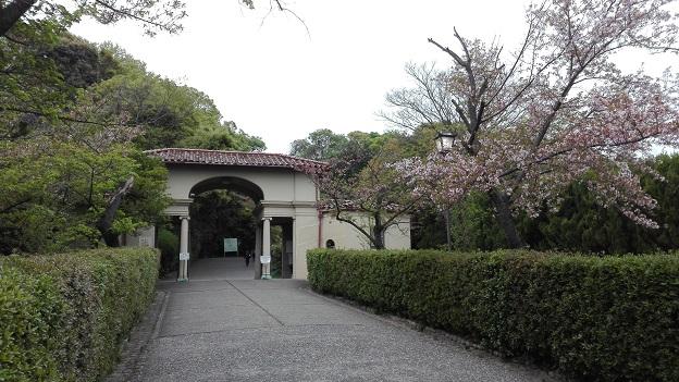170421 正門の桜 (2)