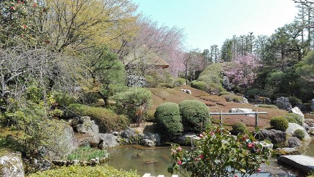 180328 京都・妙心寺 (9)