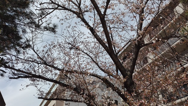 180324 妹新参・公園 (6)