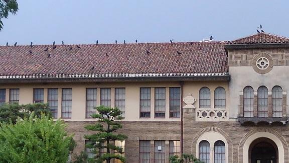 180629 大学・カラス (3)