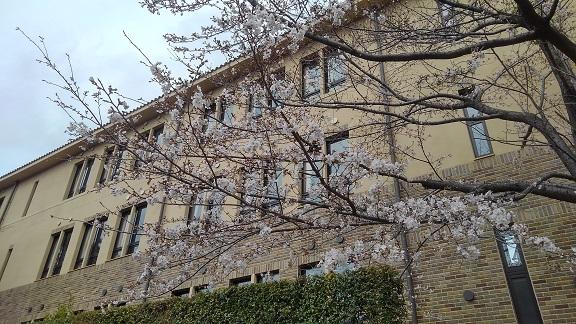 190328 桜・誕生祝い (7)