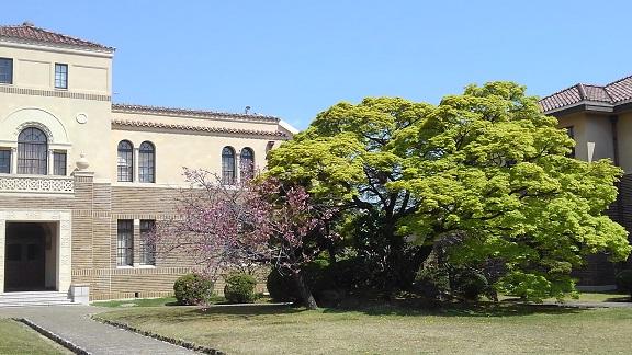 190408 大学の桜 (4)