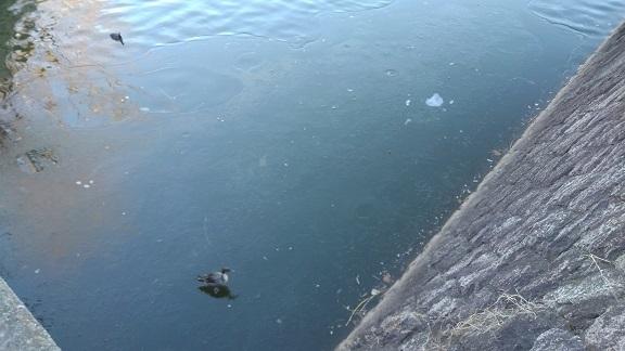210109 新池の氷 (2)